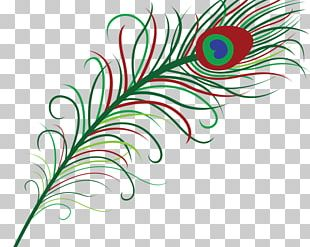Feather Pavo Bird PNG