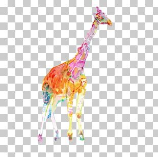 Colorful Giraffe Watercolor Painting Illustration PNG