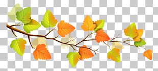 Autumn Branch Tree PNG