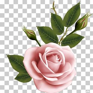 Flower Garden Roses Beach Rose PNG