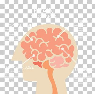 Human Brain Infographic Cerebrum PNG