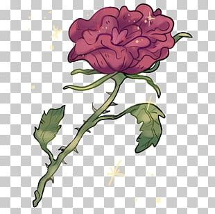 Garden Roses Cabbage Rose Cut Flowers 9 October PNG