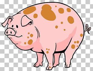 Domestic Pig Pig's Ear Cartoon PNG