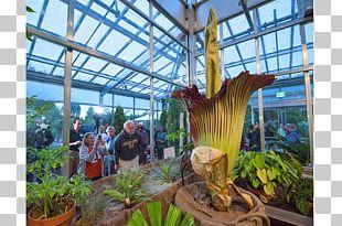 Flower Titan Arum Botanical Garden Botany PNG