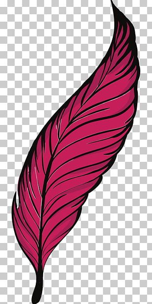 Bird Feather Quill PNG
