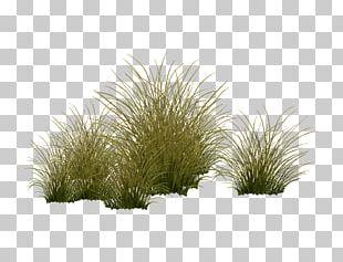 Vegetation Shrubland Tree Grasses Plant PNG