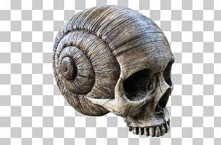 Human Skull Symbolism Bone Skull Art PNG
