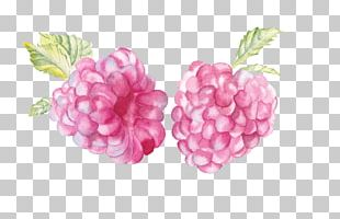Raspberry Watercolor Painting Watercolour Flowers Watercolor Landscape Illustration PNG