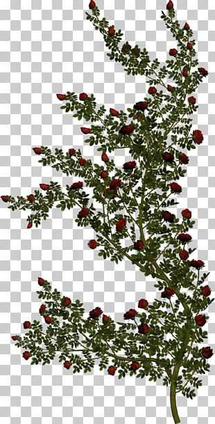 Stock Photography Rose Vine Green PNG