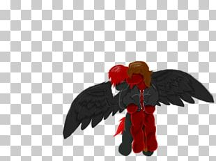 Rooster Feather Beak PNG