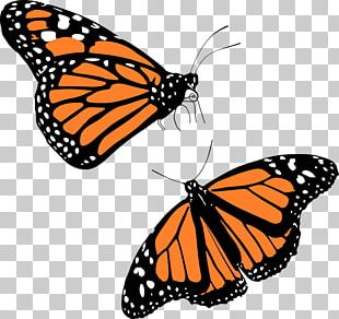 Monarch Butterfly Migration PNG
