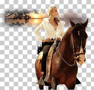 Horse Fashion Equestrian Photography PNG