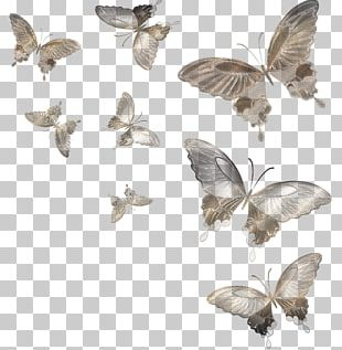 Butterfly Moth Insect PNG
