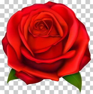 Black Rose Red PNG