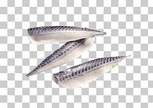 Pacific Saury Fish Fillet Seafood Mackerel PNG