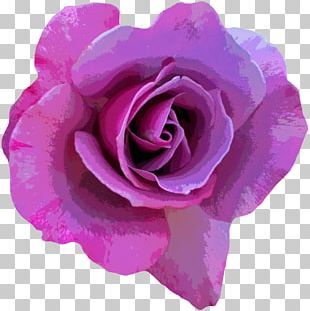 Rose Flower Photography Pink PNG