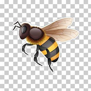 Western Honey Bee Hornet Bumblebee PNG