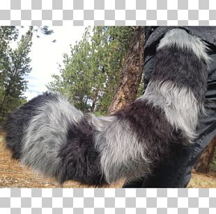 Australian Shepherd Raccoon Cat Rare Breed (dog) Tail PNG
