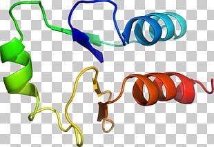 Body Jewellery Line PNG