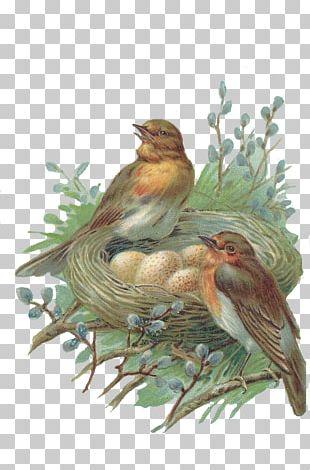 Edible Bird's Nest Bird Nest PNG