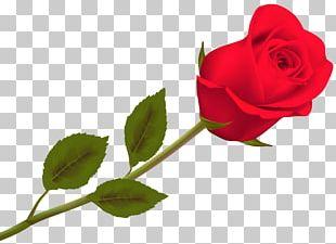 Valentine's Day Rose Day 2018 Desktop PNG
