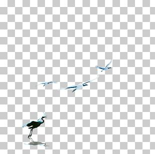 Floor Beak Angle LINE Pattern PNG