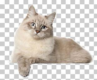 Siberian Cat British Shorthair Norwegian Forest Cat Persian Cat Asian Semi-longhair PNG