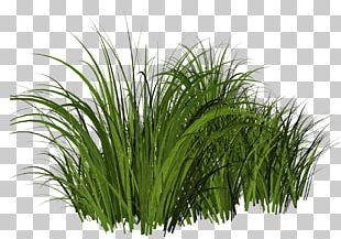 Thepix Grass PNG