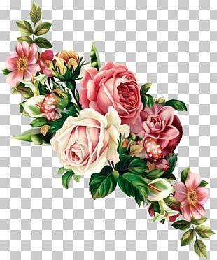 Vintage Roses: Beautiful Varieties For Home And Garden Flower PNG