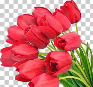 Tulip Flower Bouquet Red Desktop PNG