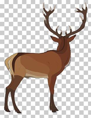 Elk White-tailed Deer Reindeer Antler PNG