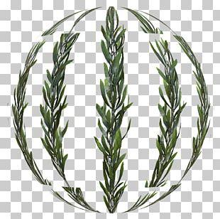 Kelp Seaweed Grasses Plant .com PNG