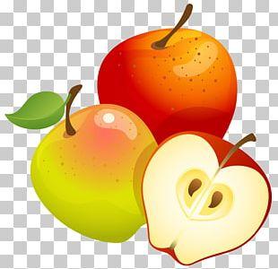 Fruit Tree Euclidean PNG