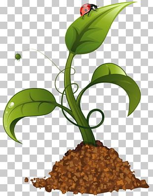 Crop Agriculture PNG