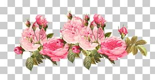 Pink Flowers Rose PNG