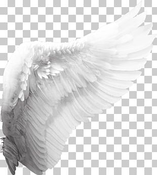 Cherub Angel Wing PNG