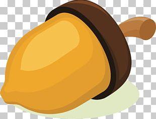 Acorn Nut PNG