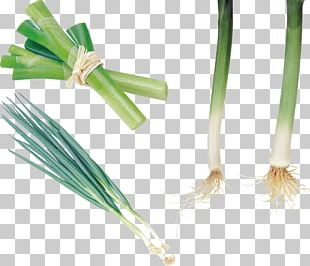 Allium Fistulosum Onion Garlic Leek Vegetable PNG