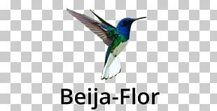 Fauna Feather Beak Wildlife PNG