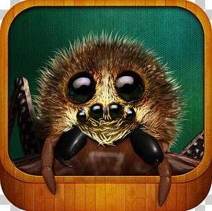 Real Scary Spiders Apple App Store IPhone Computer PNG