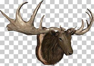 Elk Moose Trophy Hunting Reindeer Horn PNG