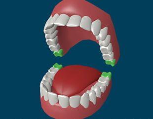 Human Tooth Wisdom Tooth Homo Sapiens Deciduous Teeth PNG
