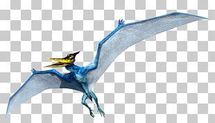 Pteranodon Microceratus Mosasaurus Velociraptor Dimorphodon PNG
