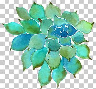 Succulent Plant Watercolor Painting Petal PNG