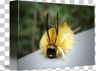 Honey Bee Bumblebee Pollen PNG