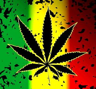 Cannabis Sativa Reggae Cannabis Smoking 420 Day PNG