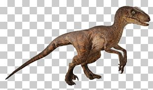 Velociraptor Robert Muldoon Jurassic Park Film Dinosaur PNG
