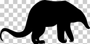 Whiskers Anteater Cat Aardvark PNG