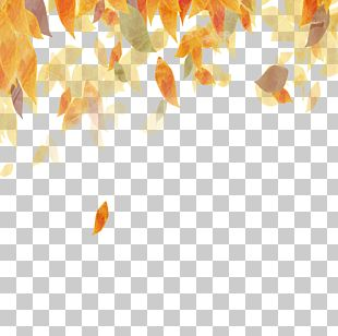 Colored Autumn Leaves PNG