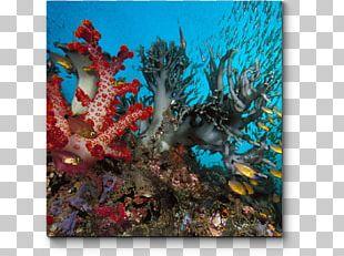 Coral Reef Underwater Deep Sea Creature Ocean PNG